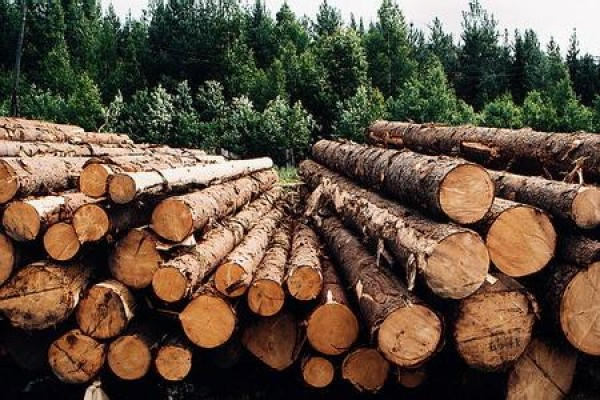Outlooks Of Russian Timber Industry 4