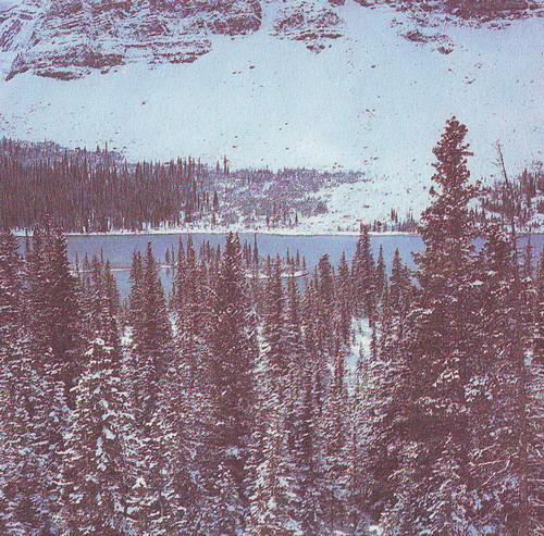 Бореальный лес, фото: recordworld.ru